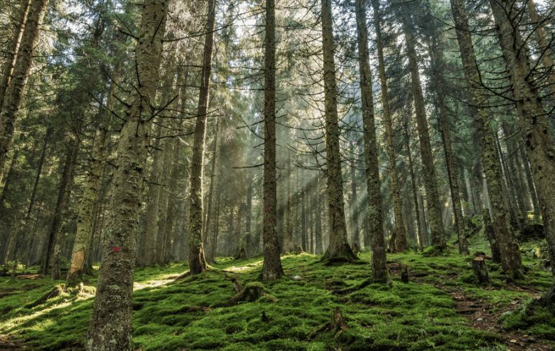bois et dérivés énergie renouvelable